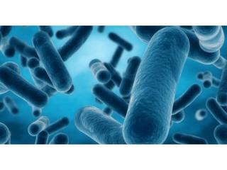 癌症「細菌療法」臨床Ⅰ期結果報佳音 (圖片來源: 網路)